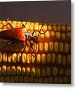 Beetle On Corn Ear Metal Print