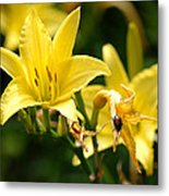 Beetle Resting On Yellow Lily Flower Metal Print