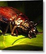 Beetle With Powerful Mandibles Metal Print