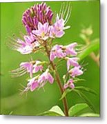 Beeweed . . .with Ant Metal Print