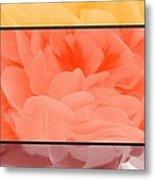 Begonia Petals Triptych Metal Print