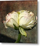 Begonia With A Tint Of Pink Metal Print