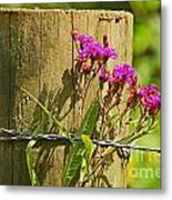 Behind The Fence Metal Print