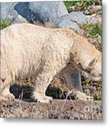 Beige Colored Polar Bear Metal Print