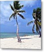 Beautiful Belize Palms Metal Print