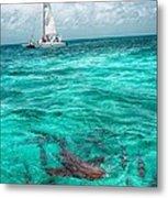 Belize Turquoise Shark N Sail  Metal Print