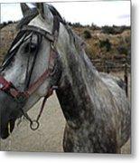 Bella On The Ranch Almanzora Mountain Spain  Metal Print