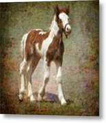 Bella Rose Metal Print