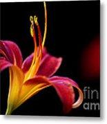 Belladonna Lily Metal Print