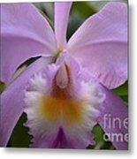 Belle Isle Orchid Metal Print