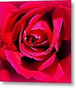Belle Rose Rouge Metal Print