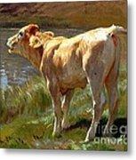 Bellowing Cow Metal Print