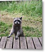 Belly Up To The Bar Metal Print by Kym Backland