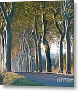 Beloved Plane Trees Metal Print