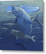 Beluga Whales Swimming As A Pod Metal Print