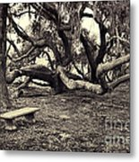 Bench And Trees Bw Metal Print