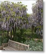 Bench And Wisteria Metal Print