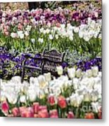 Bench Between The Tulips At Dallas Arboretum  Metal Print