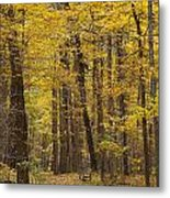 Bench In Fall Color Metal Print