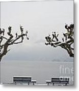 Benches And A Trees Metal Print