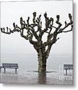 Benches And Tree Metal Print