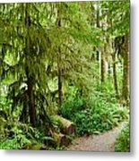 Bend In The Rainforest Metal Print