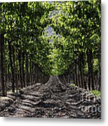 Beneath The Vines Metal Print