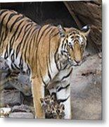 Bengal Tiger And Cubs Bandhavgarh Np Metal Print