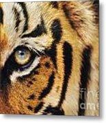 Bengal Tiger Face Metal Print