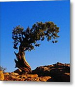 Bent By The Wind Metal Print