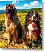 Bernese Mountain Dog And Leonberger Among Wildflowers Metal Print
