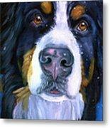 Bernese Mountain Dog In Snowfall Metal Print