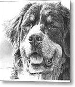 Bernese Mountain Dog Pencil Portrait Metal Print