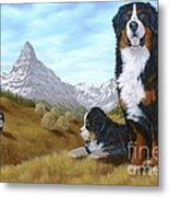 Bernese Mountain Dog Metal Print