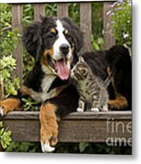 Bernese Mountain Puppy & Kitten Metal Print