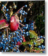 Berries And Red Leaves After The Rain Metal Print