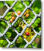 Berries And The City - Featured 3 Metal Print