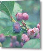 Berries For You Metal Print