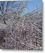 Berries In Ice Metal Print