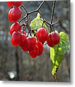 Berries In Winter Metal Print