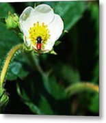 #berry Metal Print