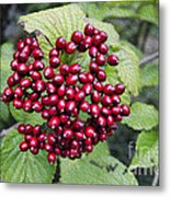 Berry Blast Metal Print