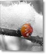 Berry-cicle Metal Print