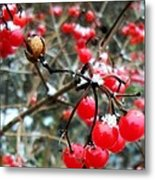 Berry Cold Outside Metal Print