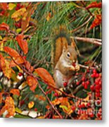 Berry Loving Squirrel Metal Print