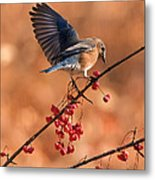 Berry Picking Bluebird Metal Print
