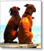 Best Friends Dog Photograph Fine Art Print Metal Print