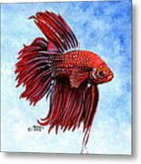 Betta-big Red Metal Print