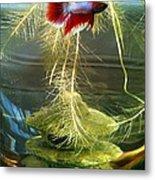 Betta Fish Moby Dick Metal Print