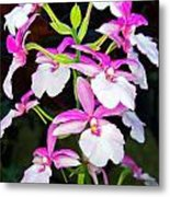 'betty' Orchid Metal Print